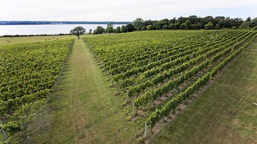 Stunning Ventosa Vineyards by Drone (Aiden Media)