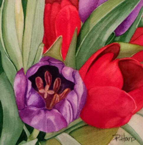 Tulip Mini