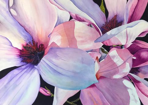 Sunwashed Magnolia