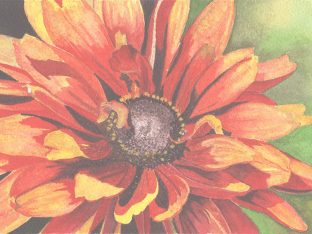 Welcome to the New and Improved Pam Harp Watercolors Website and Blog