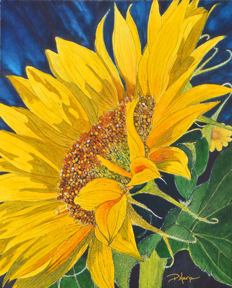 Golden Rayed Beauty
