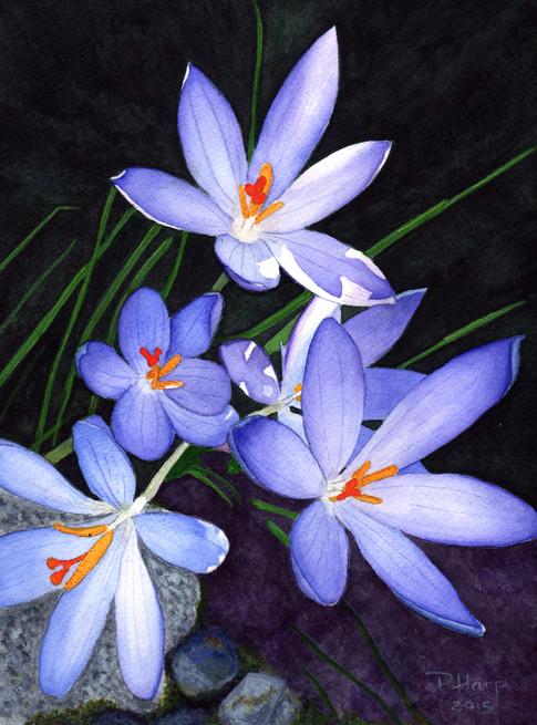 Springs First Bloom