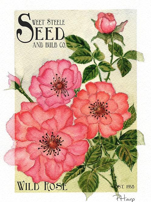 Wild Rose - Sweet Steele Seed & Bulb Co. Greeting Card