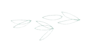 Leaf%25202_edited_edited.png