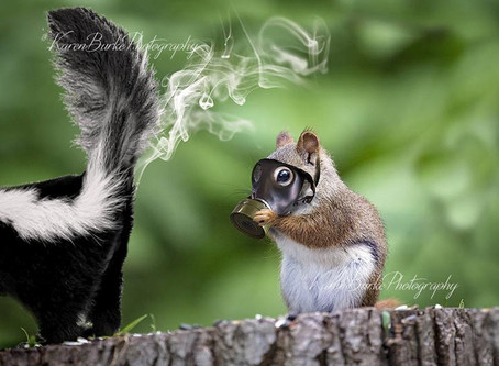 Are squirrels hoarding acorns and masks?