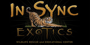 In Sync Exotics Rescue