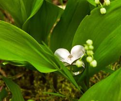 FR 61 - Ring Frühlingsblume