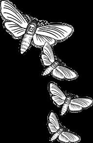 Hand-drawn moths