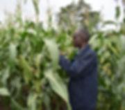 Grainpulse Head of Agronomy during farme