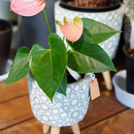 おすすめ!観葉植物&鉢カバー