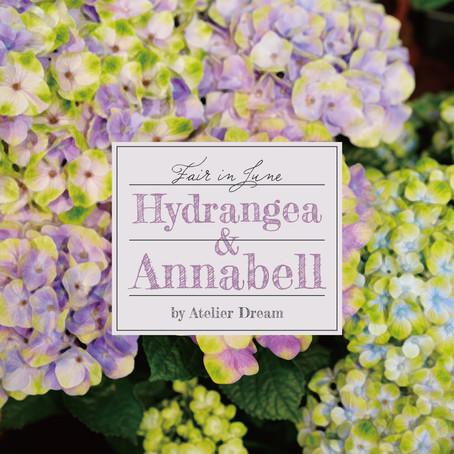 【Hydrangea&Annabell】紫陽花&アナベルフェア