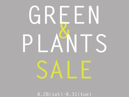 夏の観葉植物セール
