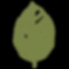 Blatt_grün2.png