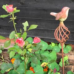 rosenblüten_mit_vogel_sehr_schön.jpg