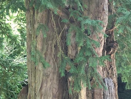 Bäume und ihre Bedeutung für die Menschen