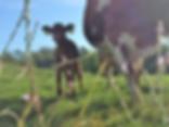 Gamser-Kuh.png