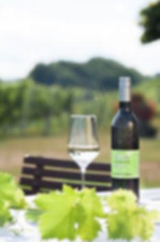 Weingut Gamser-050.jpg