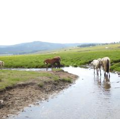 pferde am wasser.JPG
