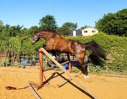 Donner jumps