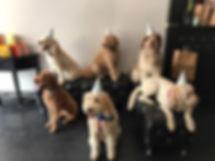 Dog Birthday Party Chicago