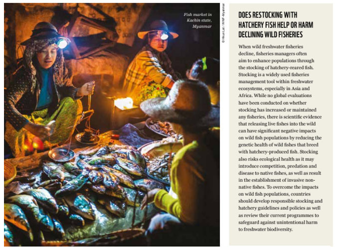 Short piece about fish stocking