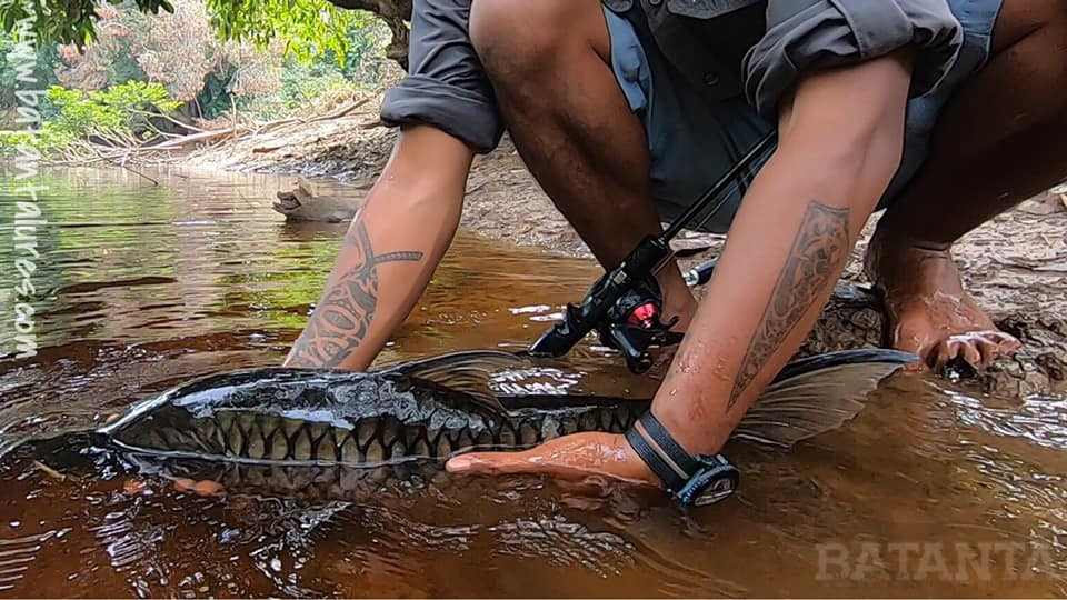 Tattooed angler returns a fish to a jungle river