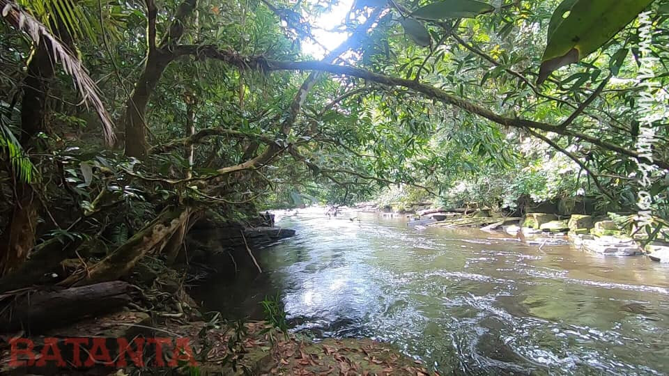 Leafy canopy over a rushing stream in Borneo