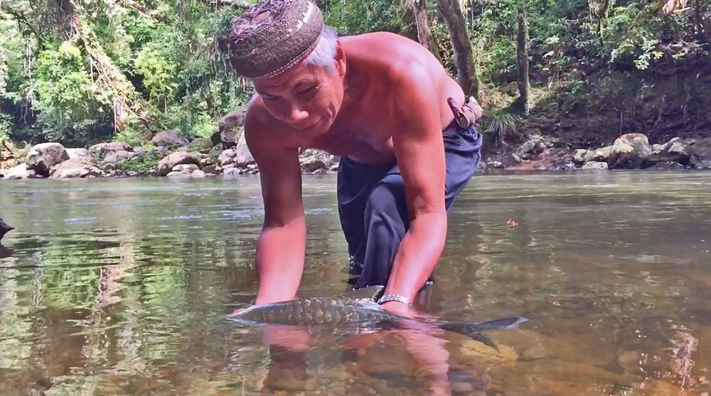 Tribal man sets mahseer fish free