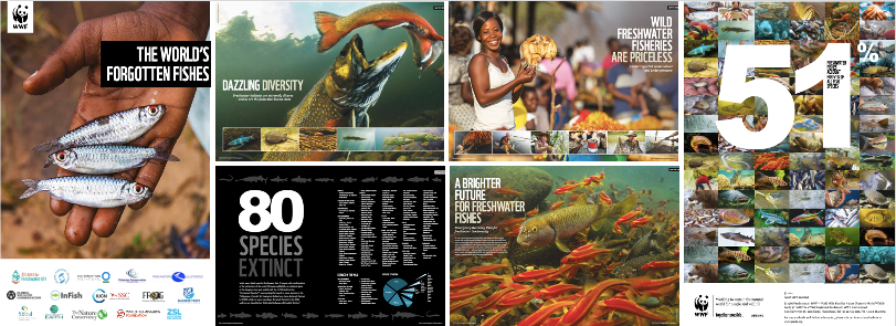 Montage of images from WWF publication The World's Forgotten Fishes