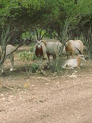 San Saba, TX Ranch