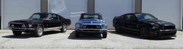 Black & Blue Shelby's.jpg