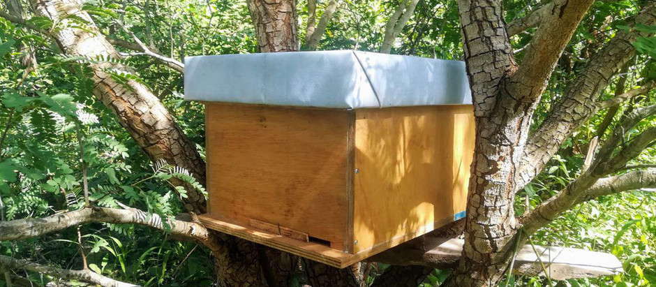 The bees have moved into your new hut by themselves! Welcome!