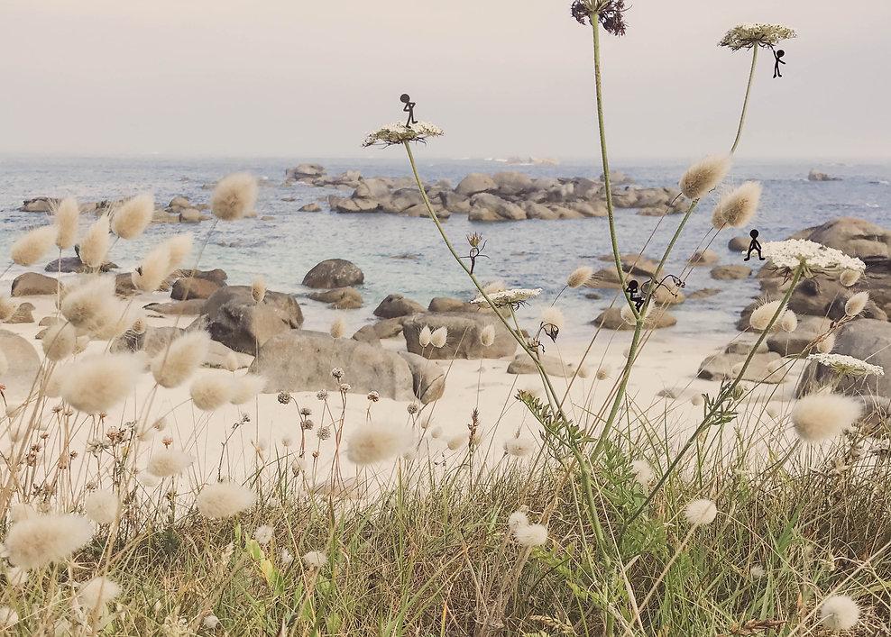 plage et fleurs-1.jpg