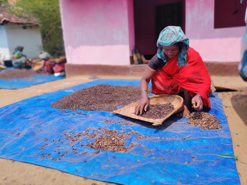 Hand seiving Coffee Cherries Woodi Peck'