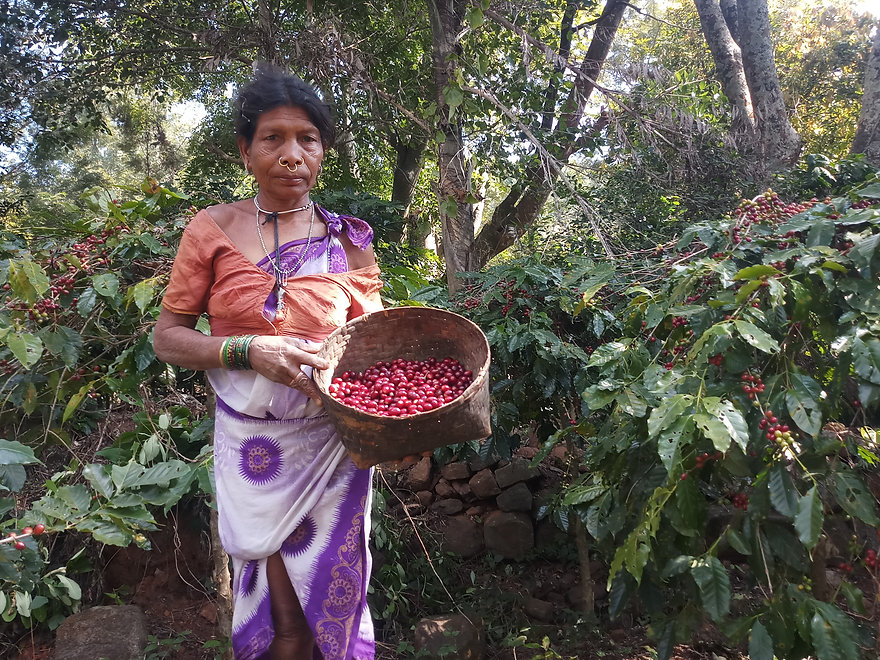 Araku Women in coffee Woodi Peck's.jpg