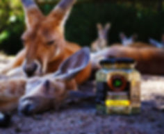Native Relaxation - Kangaroo 2.JPG