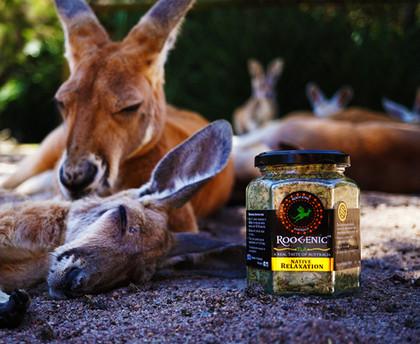 Native Relaxation - Kangaroo 2.JPG