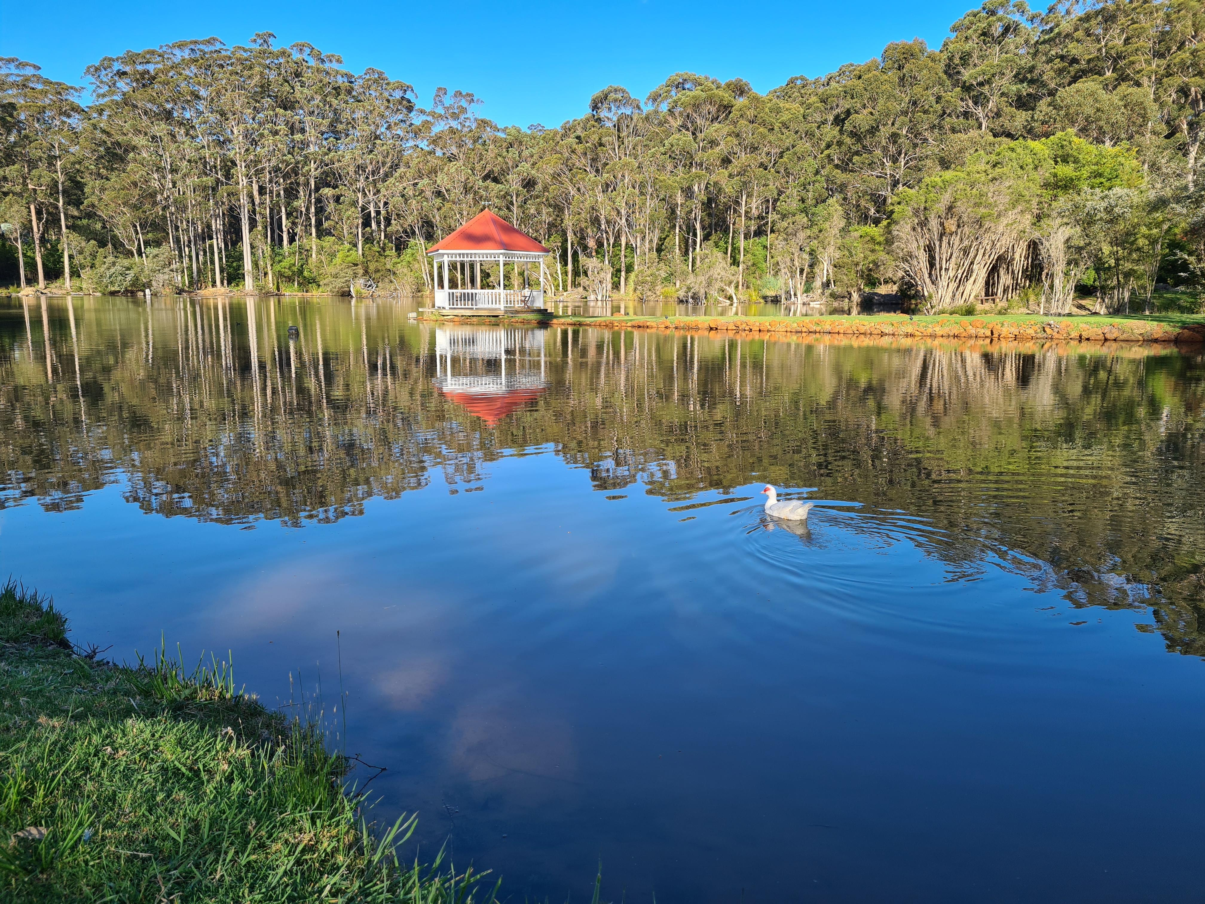 duck on lake