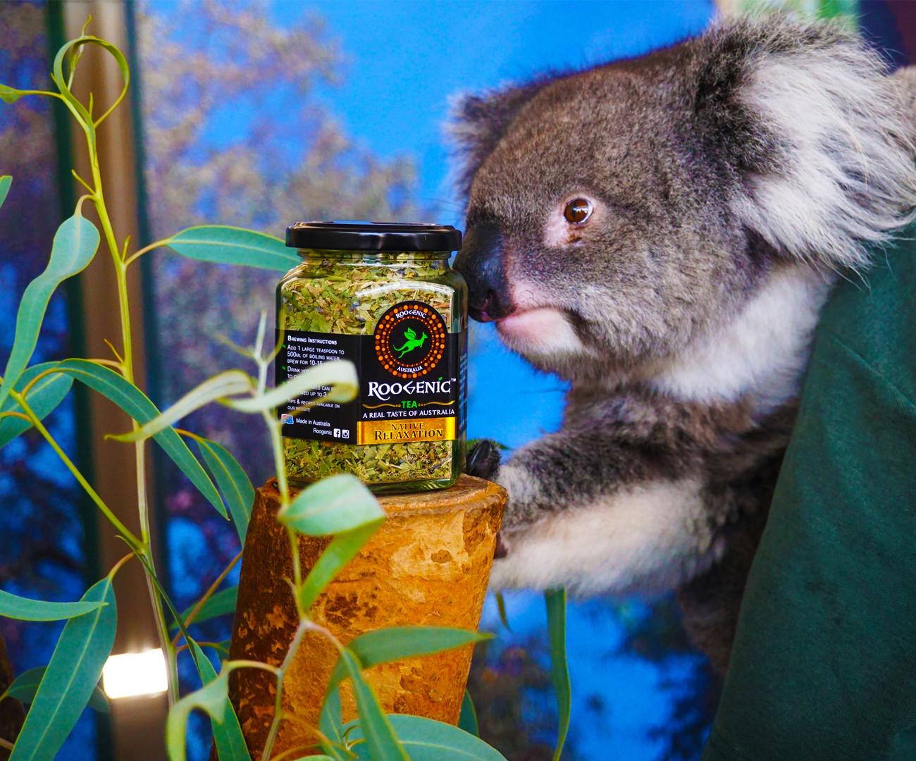 Native Relaxation - Koala 1.JPG