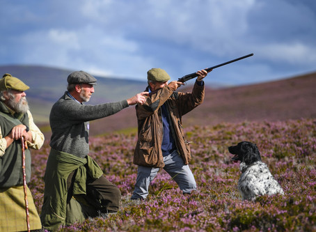 "EXCELLENT ARTICLE  ""IN DEFENCE OF THE GROUSE SHOOTING EXEMPTION"""