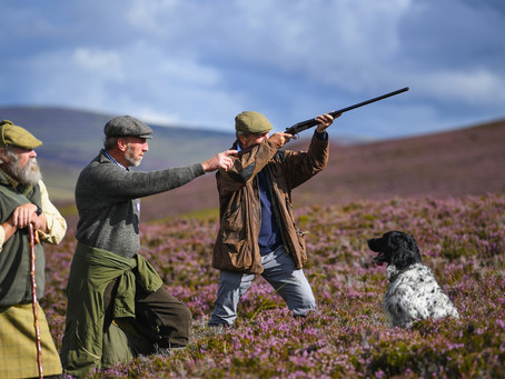 """EXCELLENT ARTICLE  """"IN DEFENCE OF THE GROUSE SHOOTING EXEMPTION"""""""