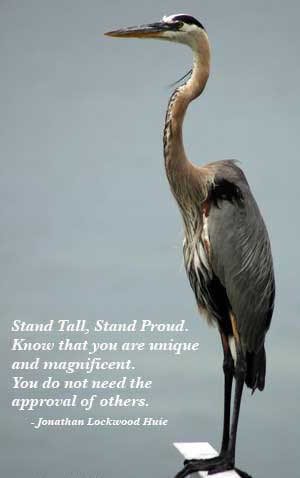 stand-tall-stand-proud-know-that-you-are-unique-and-magnificent-you-dont-need-the-approval-of-others