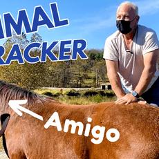 Amigo Thumbnail.png