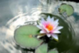 flower-3254952__480.jpg