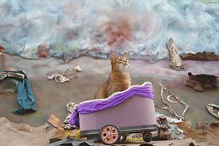 Cat 7.jpg
