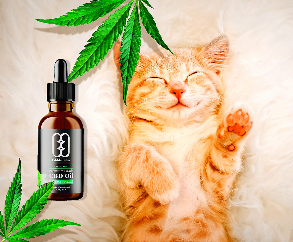 Kitty cat dosing happily beside a bottle of CBD