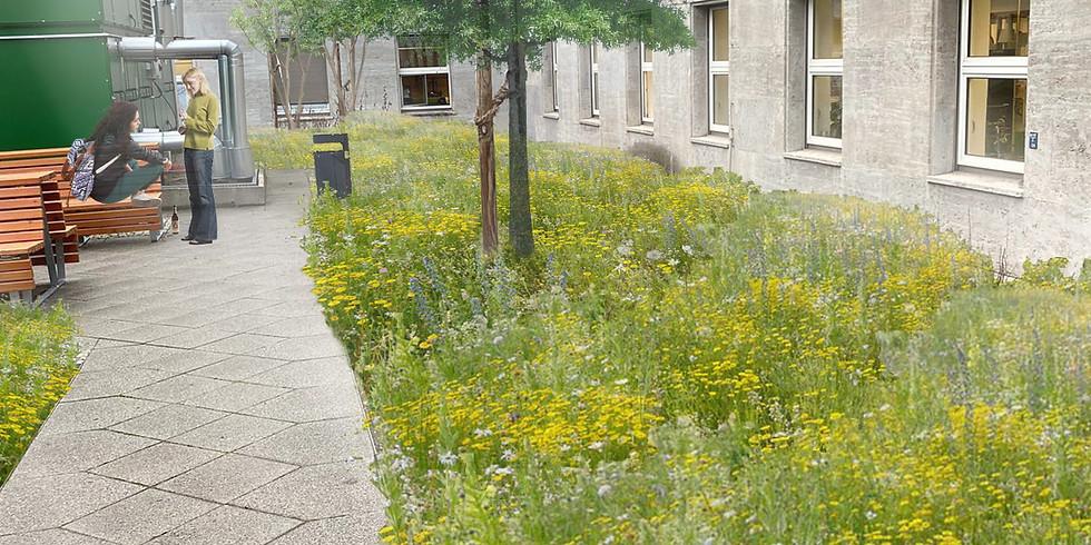 Nachhaltiger Wildbienenschutz in der Stadt