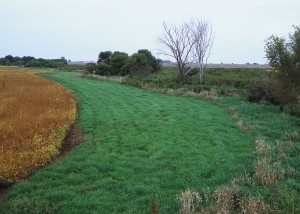 Innovative Buffer Program Benefits Farmers and Surface Water