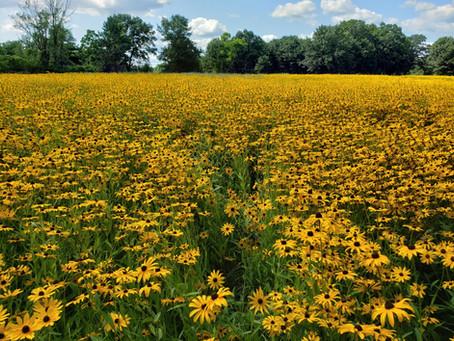 Pollinator Habitat Webinar Series