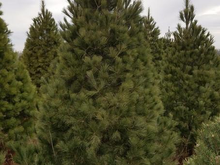 2021 Tree Sales